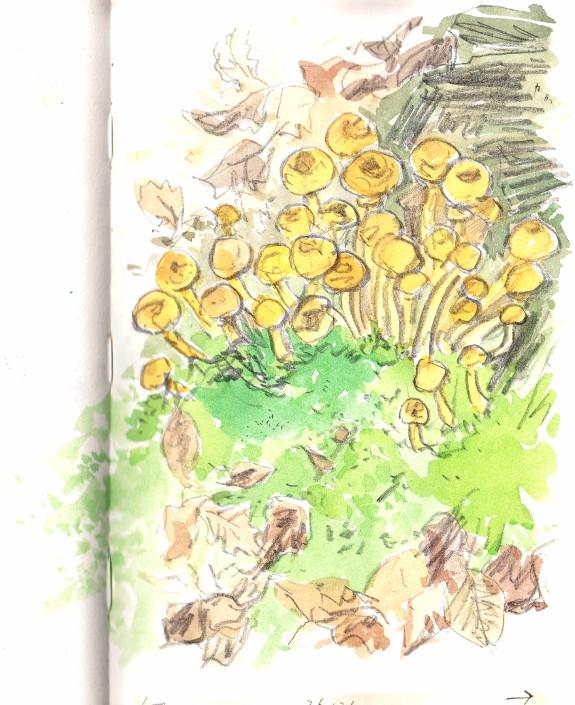 10 12 15 champignons b