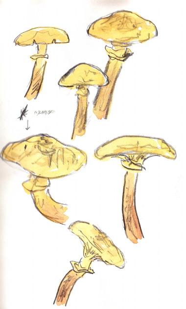 10 12 15 champignons-1025