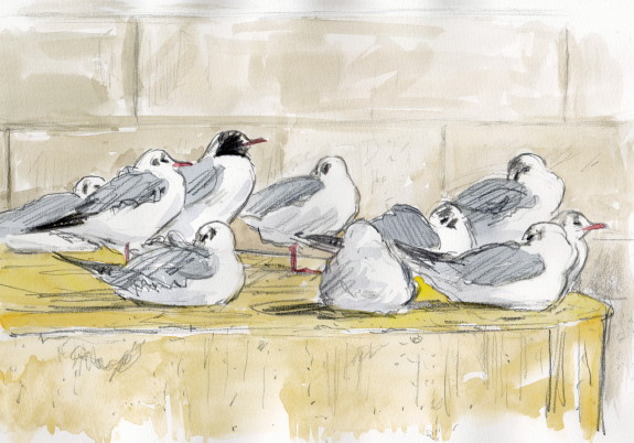 110310mouettes