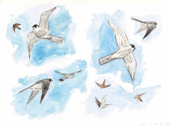 Chasseurs d oiseaux tsunehiko kuwabara sculpteur - Dessiner un faucon ...