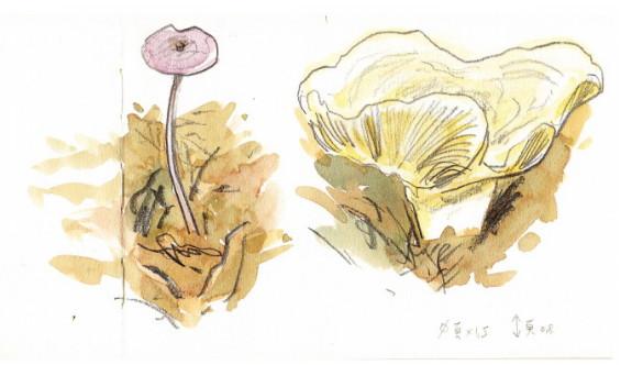 1101 champignons 1019