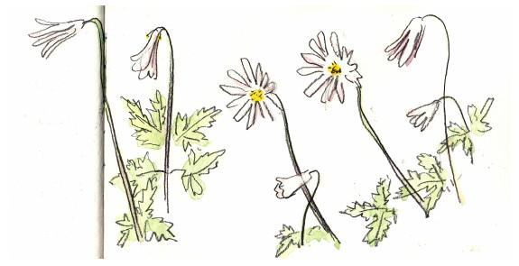 0520Naples fleurs0410