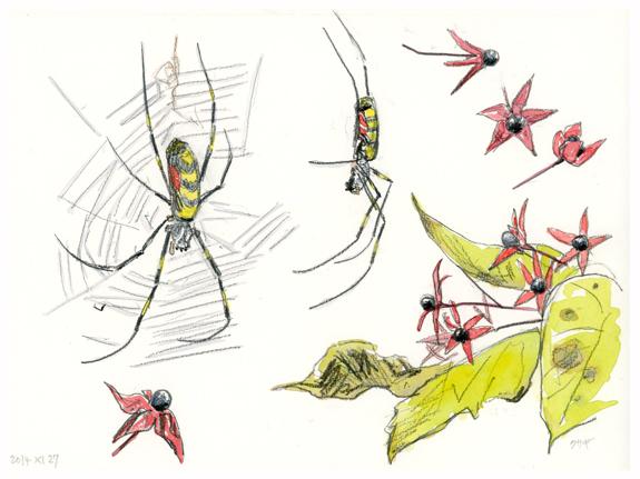 blog150217Jpn araignée