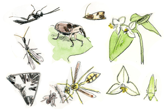 0611insectes